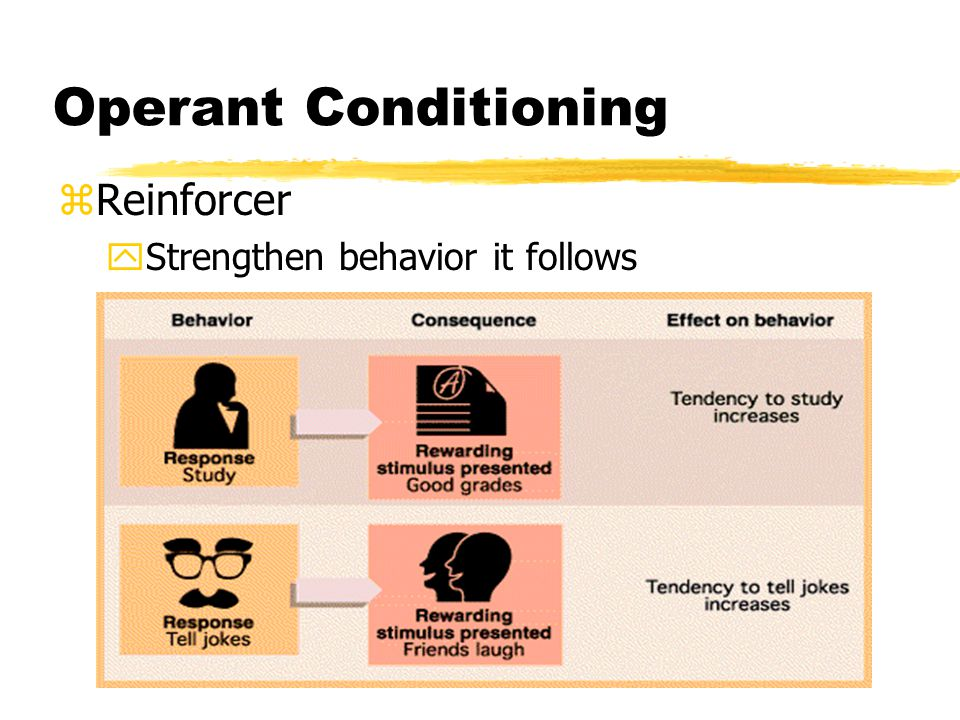 Operant Conditioning zReinforcer yStrengthen behavior it follows