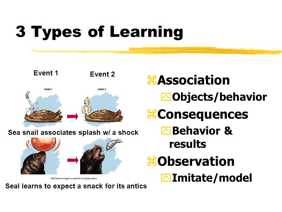 3 Types of Learning zAssociation yObjects/behavior zConsequences yBehavior & results zObservation yImitate/model Event 1 Event 2 Sea snail associates splash w/ a shock Seal learns to expect a snack for its antics