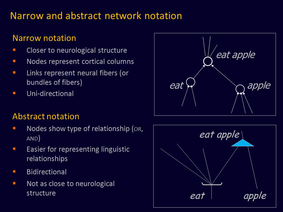 Narrow and abstract network notation Narrow notation  Closer to neurological structure  Nodes represent cortical columns  Links represent neural fibers (or bundles of fibers)  Uni-directional Abstract notation  Nodes show type of relationship ( OR, AND )  Easier for representing linguistic relationships  Bidirectional  Not as close to neurological structure eat apple
