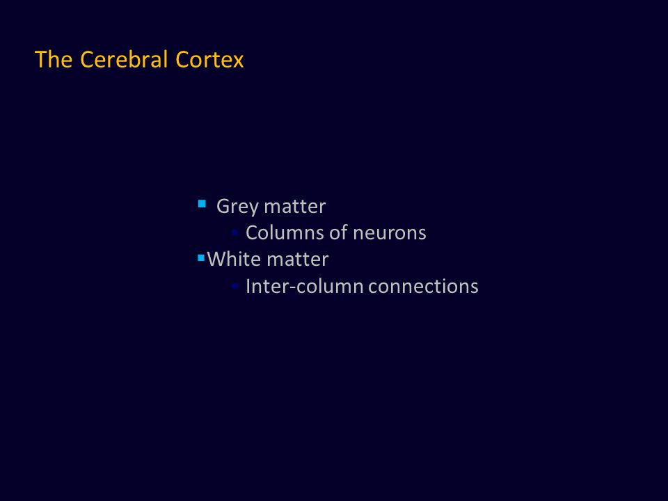 The Cerebral Cortex  Grey matter Columns of neurons  White matter Inter-column connections