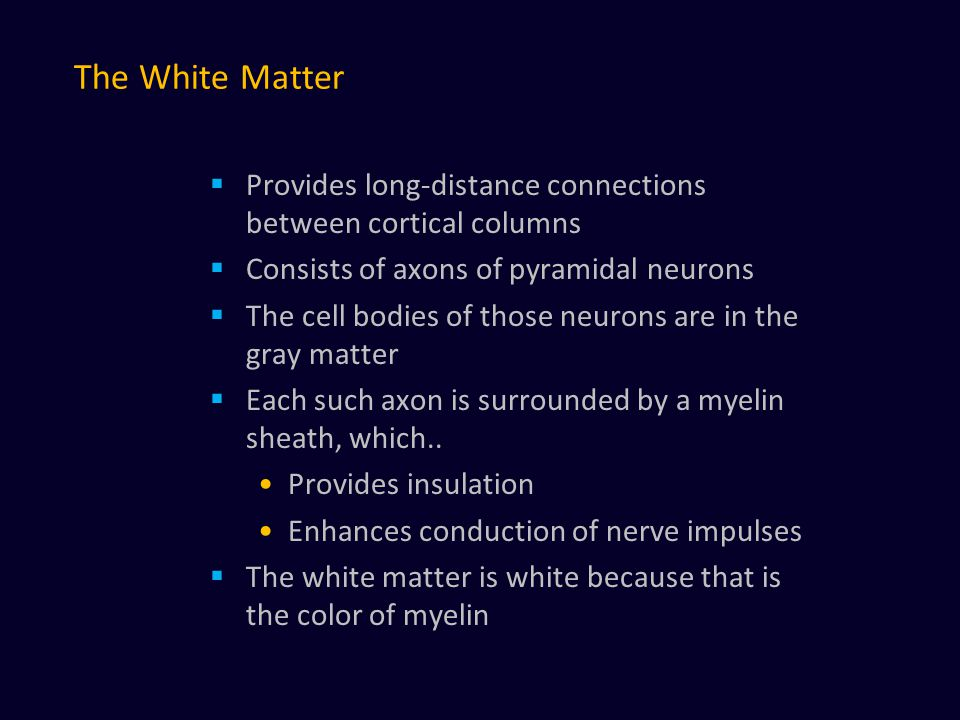 The White Matter  Provides long-distance connections between cortical columns  Consists of axons of pyramidal neurons  The cell bodies of those neurons are in the gray matter  Each such axon is surrounded by a myelin sheath, which..