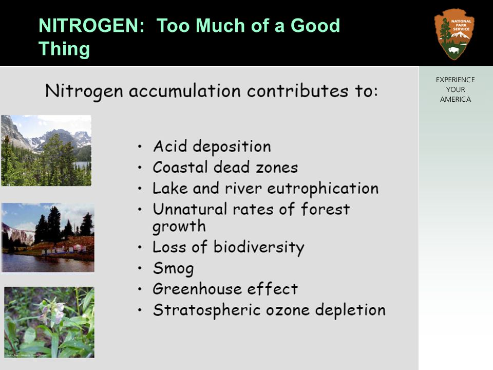 NITROGEN: Too Much of a Good Thing