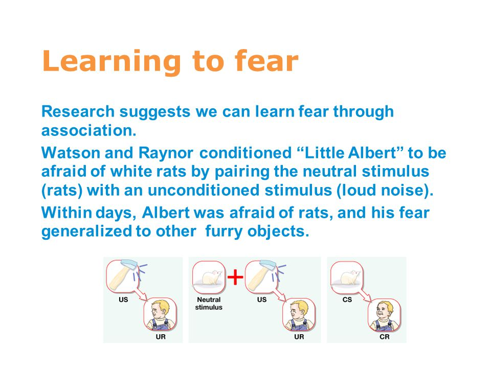 "Learning to fear Research suggests we can learn fear through association. Watson and Raynor conditioned ""Little Albert"" to be afraid of white rats by"