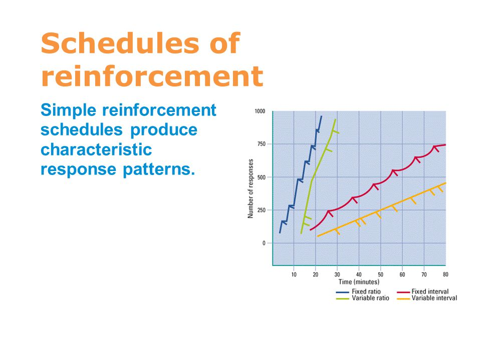 Schedules of reinforcement Simple reinforcement schedules produce characteristic response patterns. 7