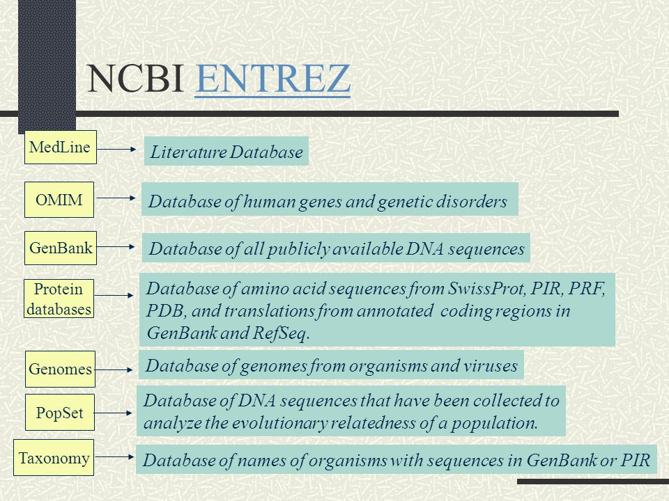 NCBI ENTREZENTREZ GenBank Protein databases Genomes PopSet Taxonomy OMIM MedLine Literature Database Database of DNA sequences that have been collected to analyze the evolutionary relatedness of a population.