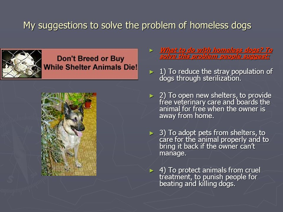 My suggestions to solve the problem of homeless dogs ► What to do with homeless dogs? To solve this problem people suggest: ► 1) To reduce the stray p