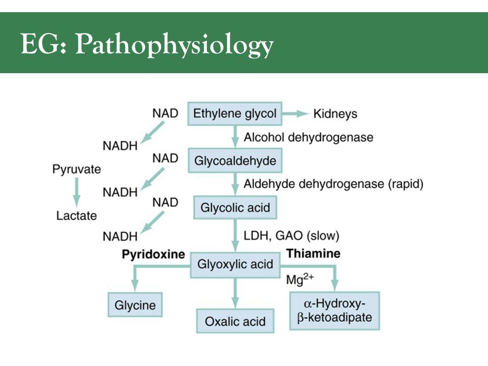 EG: Pathophysiology