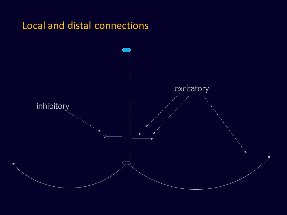 Local and distal connections excitatory inhibitory