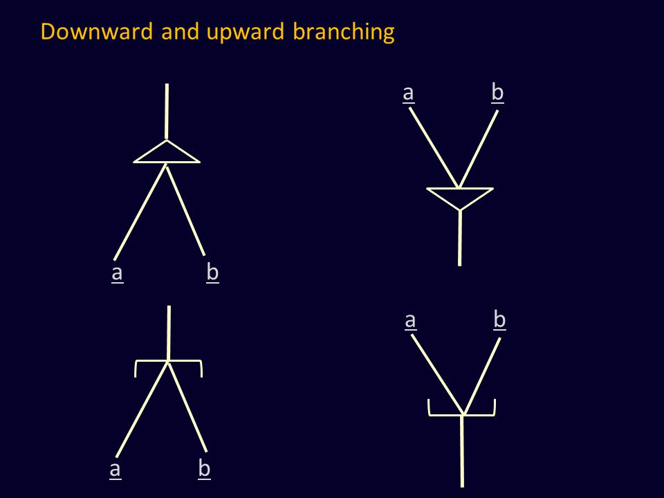 Downward and upward branching a b