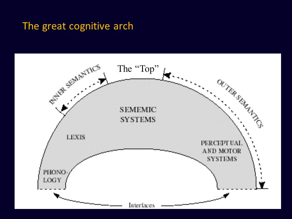 The great cognitive arch The Top
