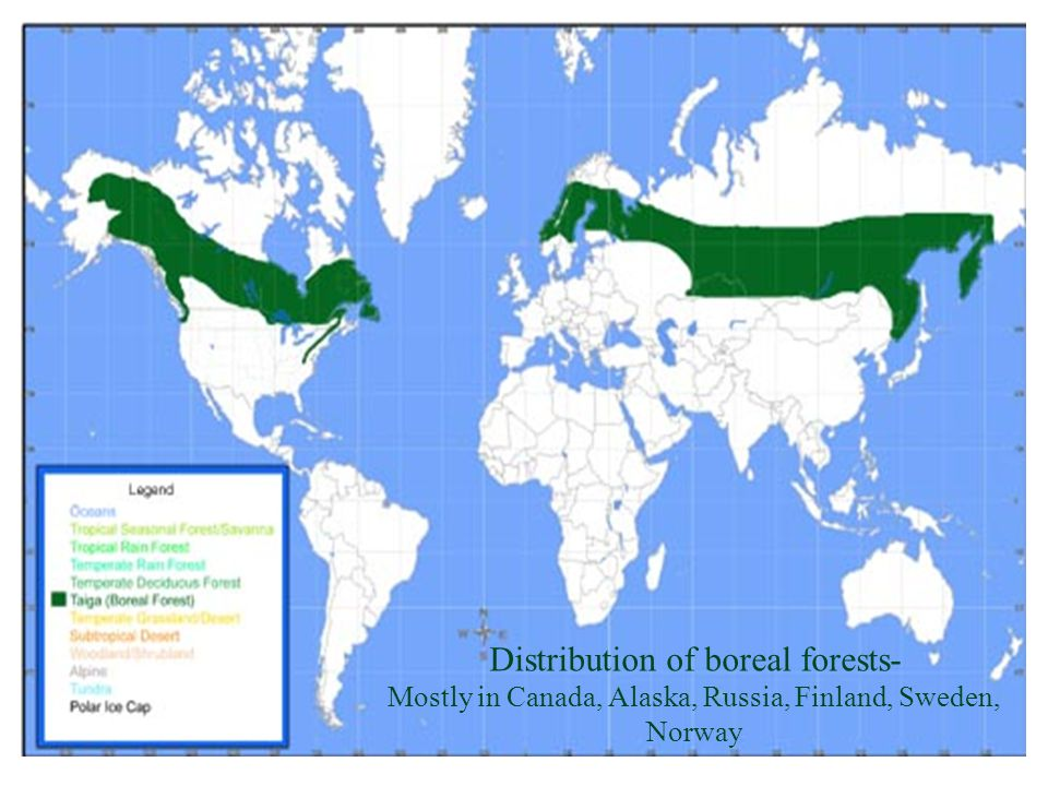 Distribution of boreal forests- Mostly in Canada, Alaska, Russia, Finland, Sweden, Norway