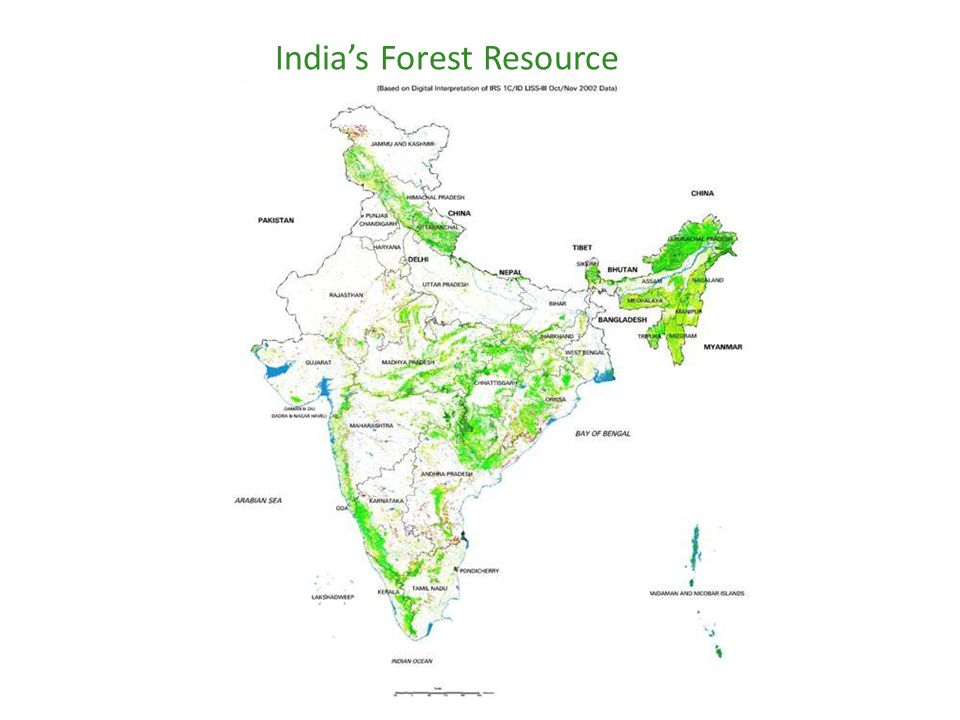 India's Forest Resource