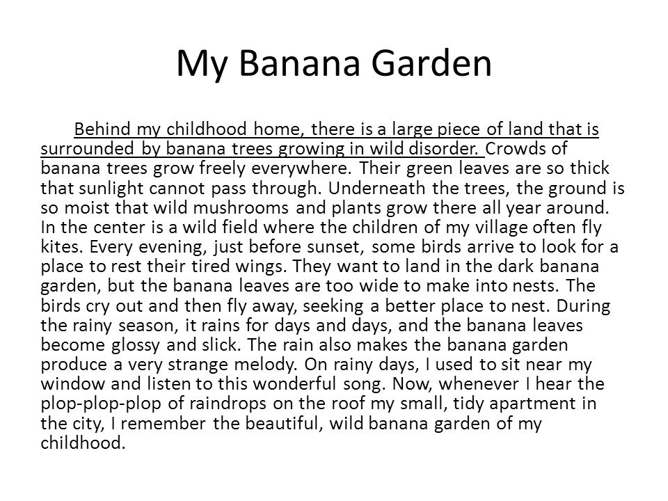 My Banana Garden Behind my childhood home, there is a large piece of land that is surrounded by banana trees growing in wild disorder. Crowds of banan