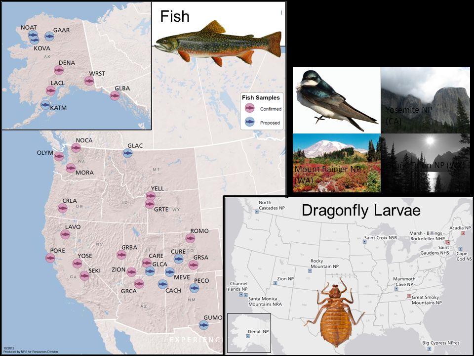 Fish Songbirds E X P E R I E N C E Y O U R A M E R I C A Grand Teton NP (WY) Mount Rainier NP (WA) Yosemite NP (CA) Monitoring Hg in NPS Biota: 2012 Dragonfly Larvae