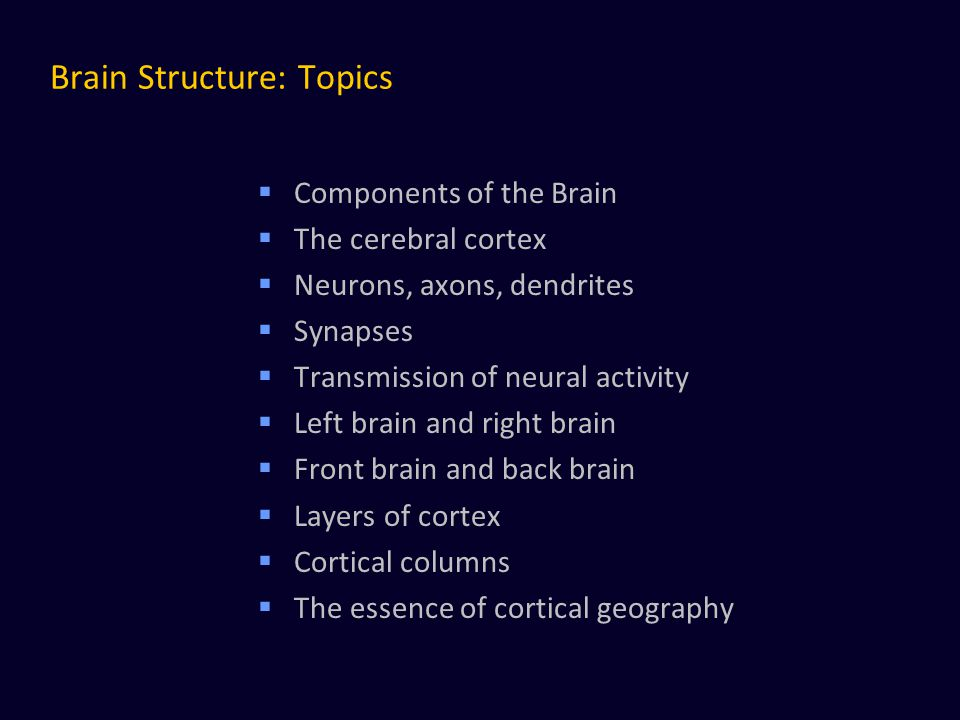 Brain Structure: Topics  Components of the Brain  The cerebral cortex  Neurons, axons, dendrites  Synapses  Transmission of neural activity  Lef