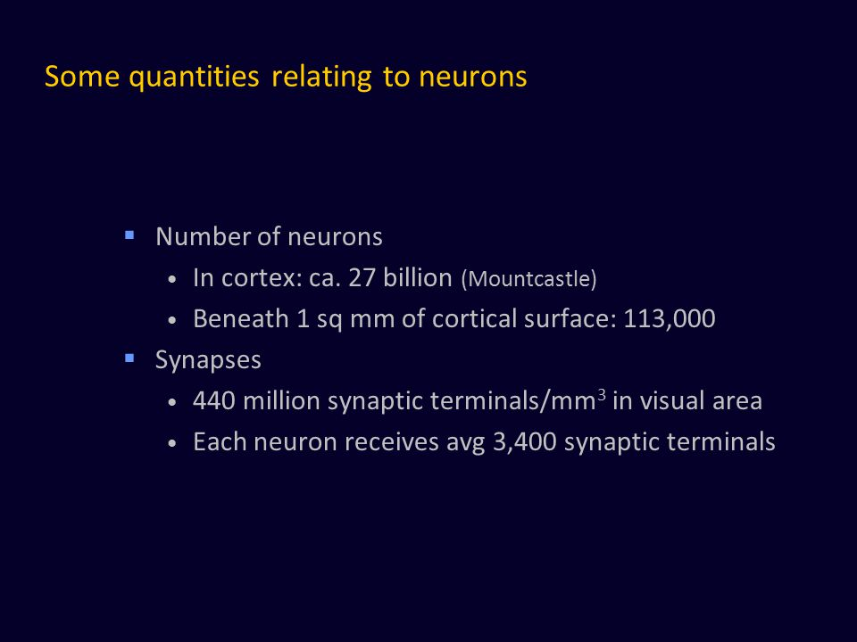 Some quantities relating to neurons  Number of neurons In cortex: ca. 27 billion (Mountcastle) Beneath 1 sq mm of cortical surface: 113,000  Synapse