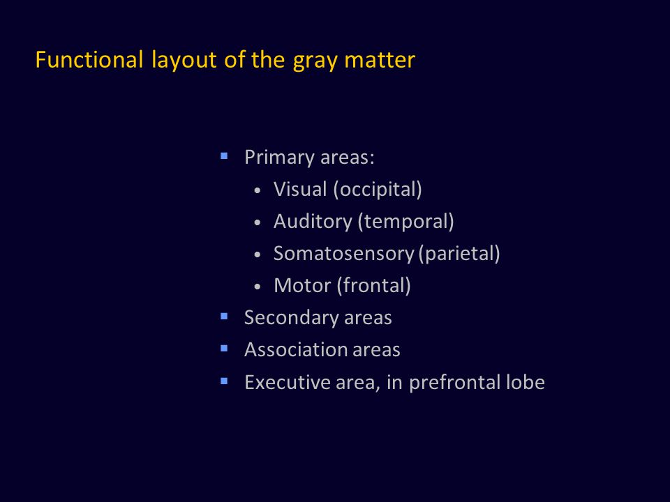 Functional layout of the gray matter  Primary areas: Visual (occipital) Auditory (temporal) Somatosensory (parietal) Motor (frontal)  Secondary area