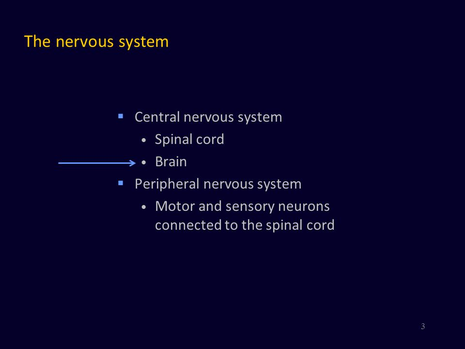 Video of Synaptic Transmission http://www.youtube.com/watch?v=HXx9qlJetSU&feature=related By Jokerwe 44