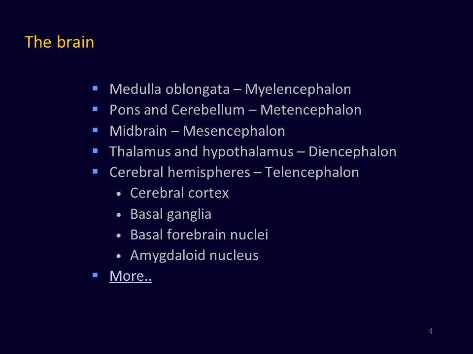 The brain  Medulla oblongata – Myelencephalon  Pons and Cerebellum – Metencephalon  Midbrain – Mesencephalon  Thalamus and hypothalamus – Diencephalon  Cerebral hemispheres – Telencephalon *Brain Stem Alternative partition: Brain stem* Cerebellum Thalamus & hypothalamus Cerebral hemispheres 5