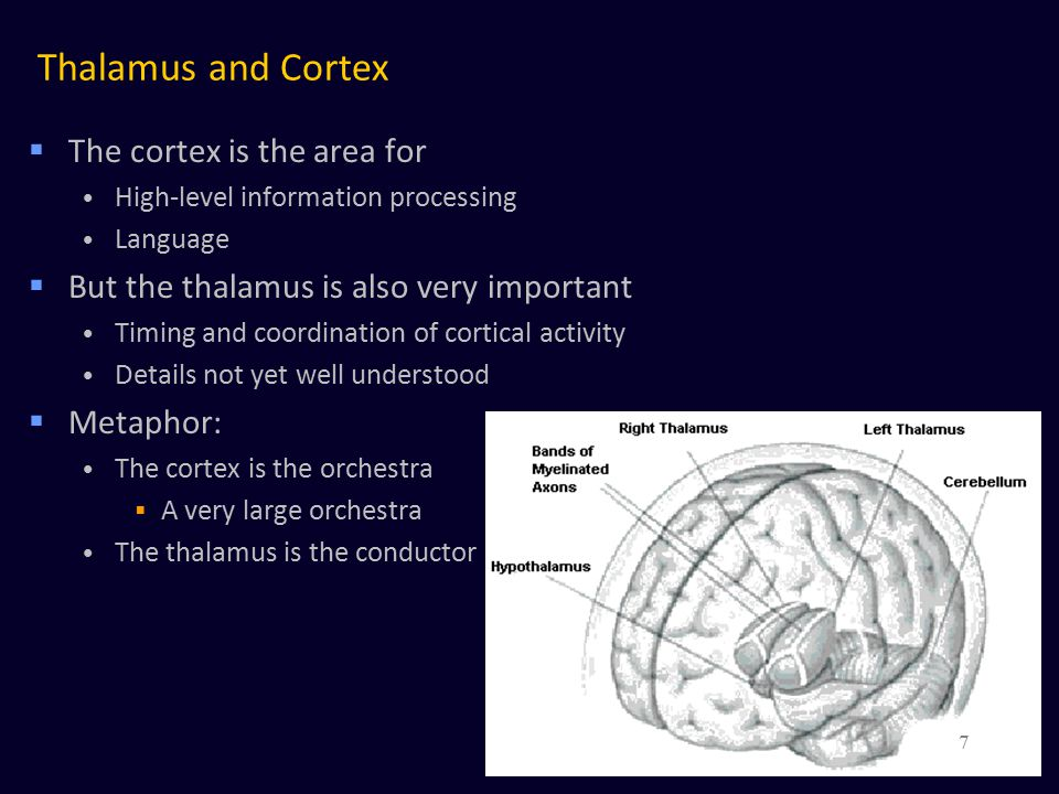 Long-distance cortico-cortical connections  White matter – Long-distance inter-column connections  Example: the arcuate fasciculus A bundle of fibers very important for language  Connects Wernicke's area to Broca's area 58