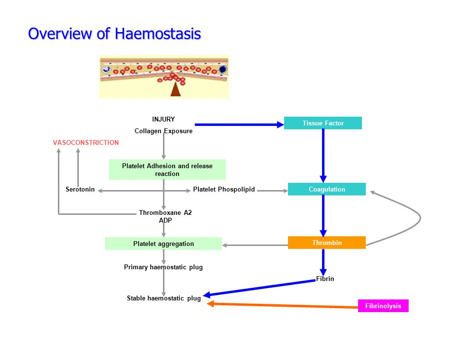 Overview of Haemostasis INJURY Collagen Exposure Platelet Adhesion and release reaction Platelet aggregation VASOCONSTRICTION SerotoninPlatelet Phospo