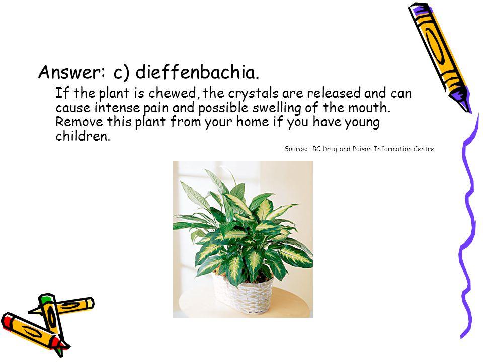 Answer: c) dieffenbachia.