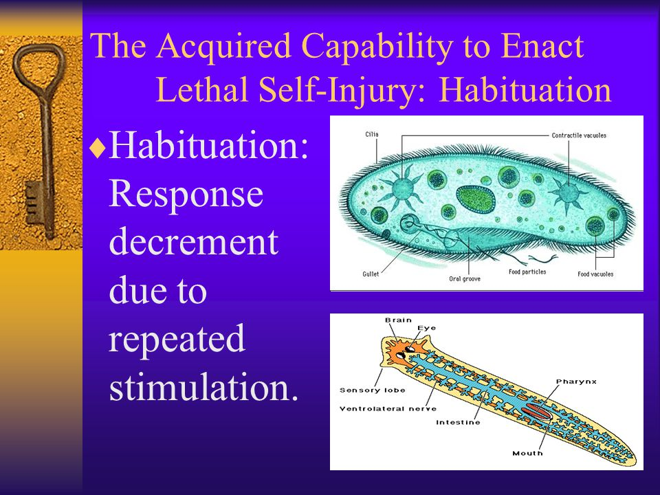 The Acquired Capability to Enact Lethal Self-Injury: Habituation  Habituation: Response decrement due to repeated stimulation.