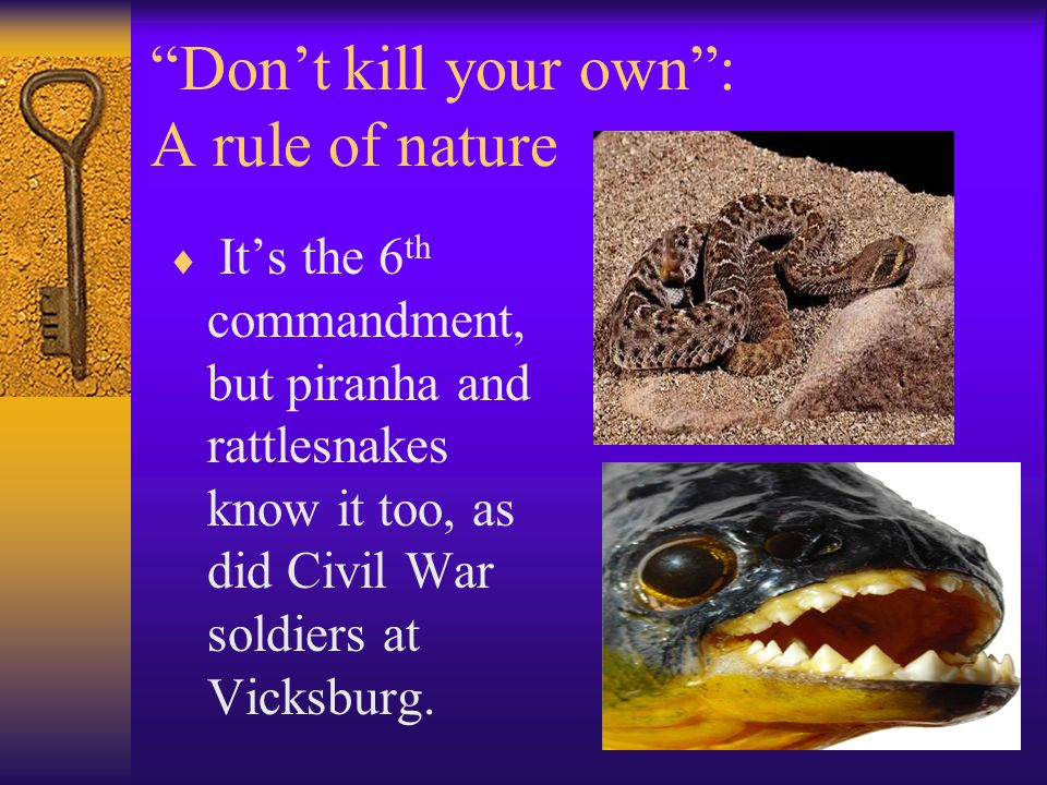 """Don't kill your own"": A rule of nature  It's the 6 th commandment, but piranha and rattlesnakes know it too, as did Civil War soldiers at Vicksburg."