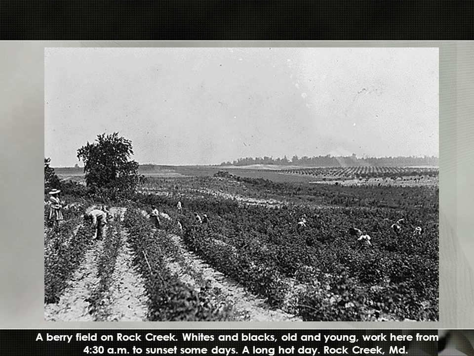 A berry field on Rock Creek. Whites and blacks, old and young, work here from 4:30 a.m.