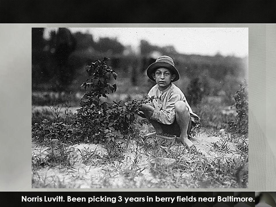 Norris Luvitt. Been picking 3 years in berry fields near Baltimore.