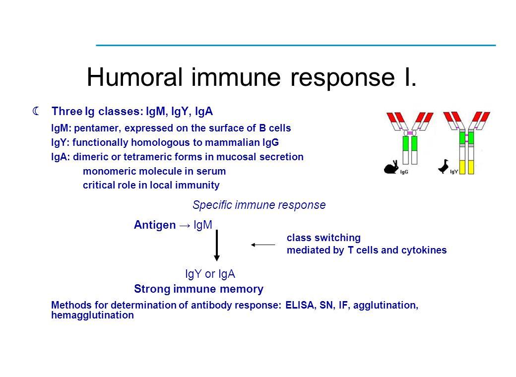  Three Ig classes: IgM, IgY, IgA IgM: pentamer, expressed on the surface of B cells IgY: functionally homologous to mammalian IgG IgA: dimeric or tet