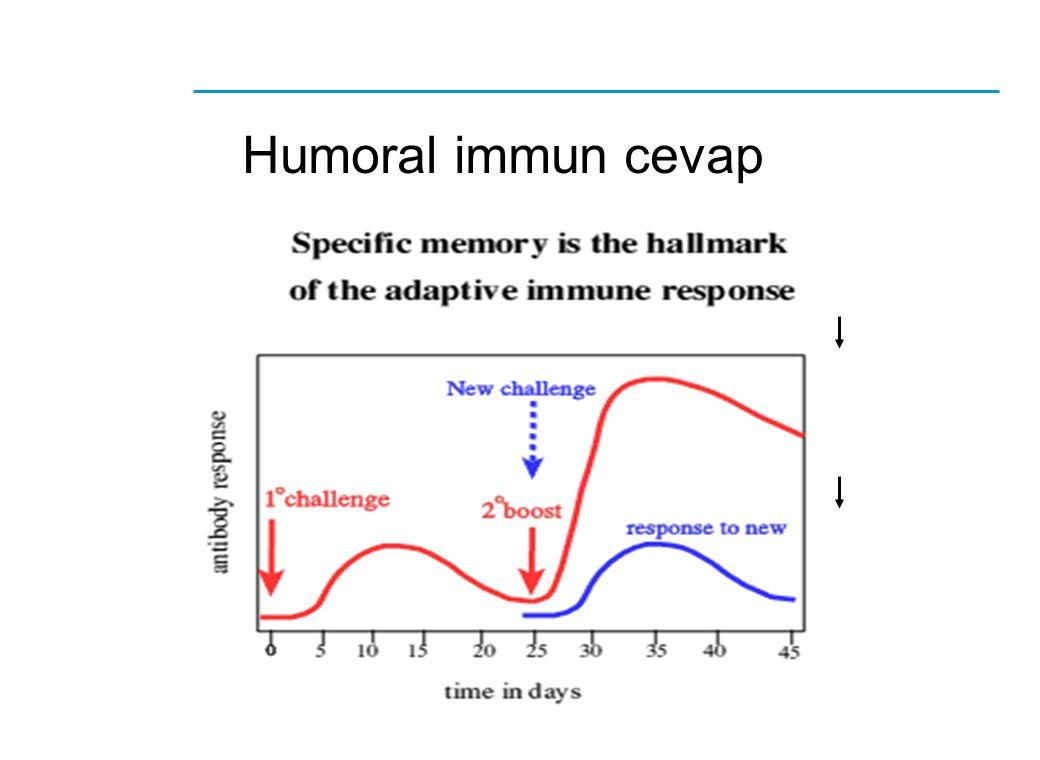 Humoral immun cevap