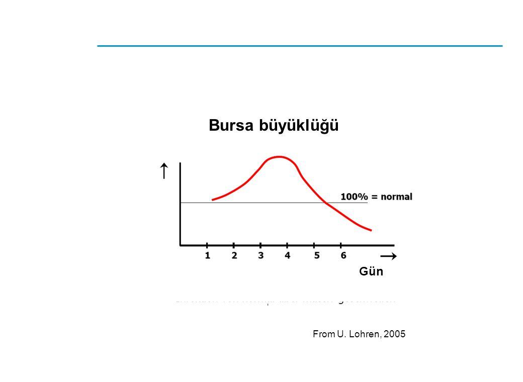Bursa büyüklüğü Gün From U. Lohren, 2005