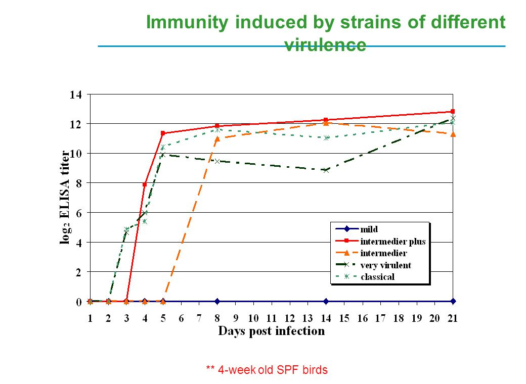 Immunity induced by strains of different virulence ** 4-week old SPF birds