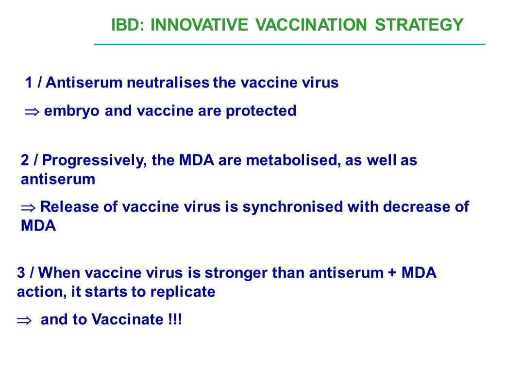 1 / Antiserum neutralises the vaccine virus  embryo and vaccine are protected 2 / Progressively, the MDA are metabolised, as well as antiserum  Rele