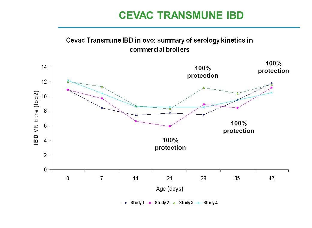 CEVAC TRANSMUNE IBD 100% protection