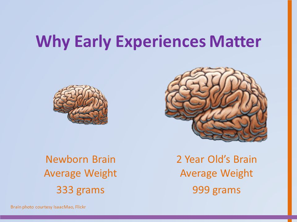 Why Early Experiences Matter Newborn Brain Average Weight 333 grams 2 Year Old's Brain Average Weight 999 grams Brain photo courtesy IsaacMao, Flickr