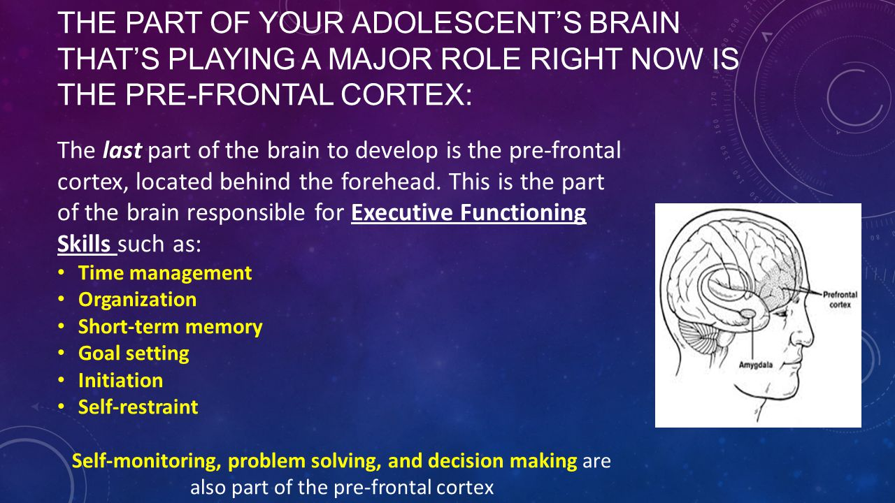 THE PART OF YOUR ADOLESCENT'S BRAIN THAT'S PLAYING A MAJOR ROLE RIGHT NOW IS THE PRE-FRONTAL CORTEX: last The last part of the brain to develop is the pre-frontal cortex, located behind the forehead.