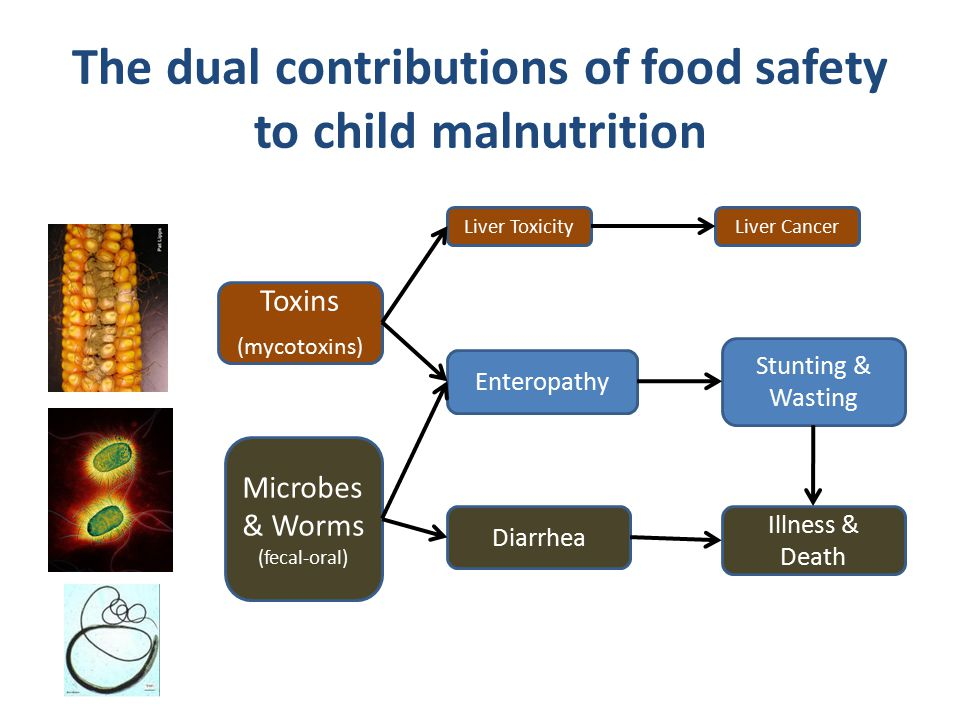 Toxins (mycotoxins) Microbes & Worms (fecal-oral) Liver Toxicity Enteropathy Diarrhea Liver Cancer Stunting & Wasting Illness & Death The dual contrib