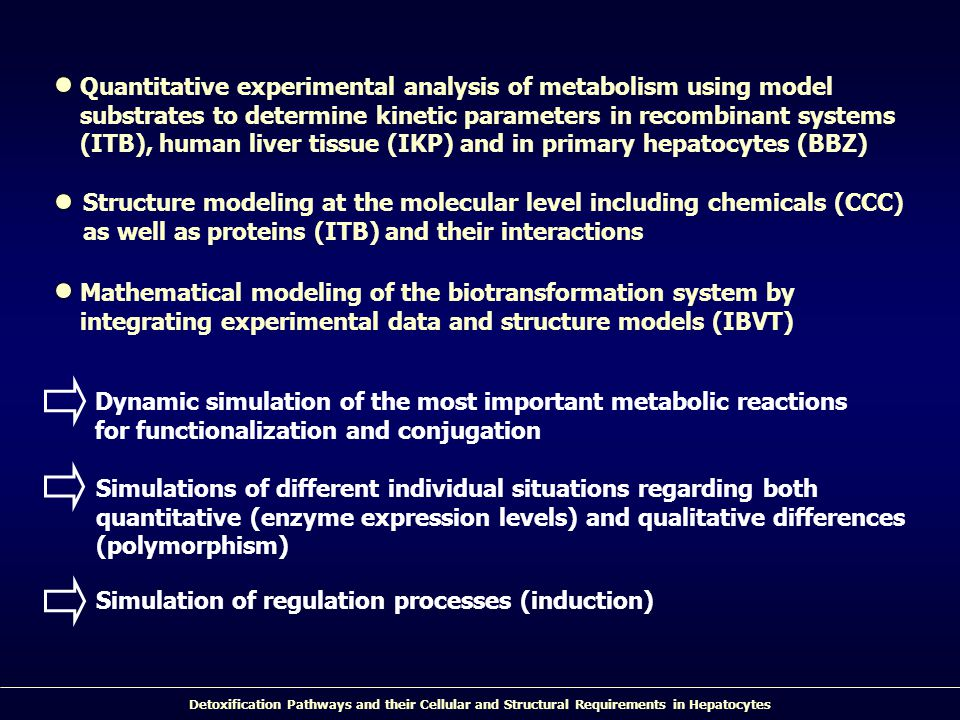Detoxification Pathways and their Cellular and Structural Requirements in Hepatocytes Quantitative experimental analysis of metabolism using model substrates to determine kinetic parameters in recombinant systems (ITB), human liver tissue (IKP) and in primary hepatocytes (BBZ) Structure modeling at the molecular level including chemicals (CCC) as well as proteins (ITB) and their interactions Mathematical modeling of the biotransformation system by integrating experimental data and structure models (IBVT) Dynamic simulation of the most important metabolic reactions for functionalization and conjugation Simulations of different individual situations regarding both quantitative (enzyme expression levels) and qualitative differences (polymorphism) Simulation of regulation processes (induction)