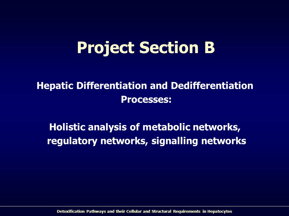 Detoxification Pathways and their Cellular and Structural Requirements in Hepatocytes Project Section B Hepatic Differentiation and Dedifferentiation Processes: Holistic analysis of metabolic networks, regulatory networks, signalling networks