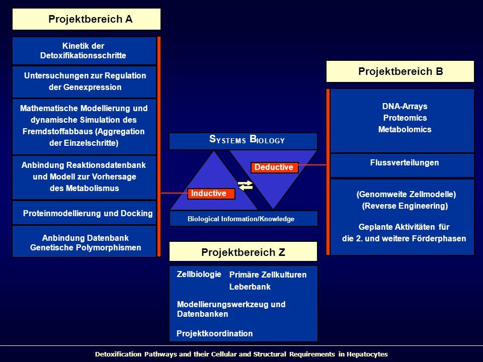 Detoxification Pathways and their Cellular and Structural Requirements in Hepatocytes S YSTEMS B IOLOGY Biological Information/Knowledge Inductive Deductive Projektbereich B Projektbereich A Flussverteilungen (Genomweite Zellmodelle) (Reverse Engineering) Geplante Aktivitäten für die 2.