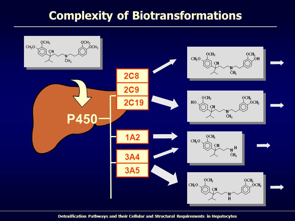 Detoxification Pathways and their Cellular and Structural Requirements in Hepatocytes Complexity of Biotransformations 2C9 2C19 2C8 1A2 3A5 3A4 P450 N OCH 3 O OCH 3 CH 3 O CN CH 3 CH 3