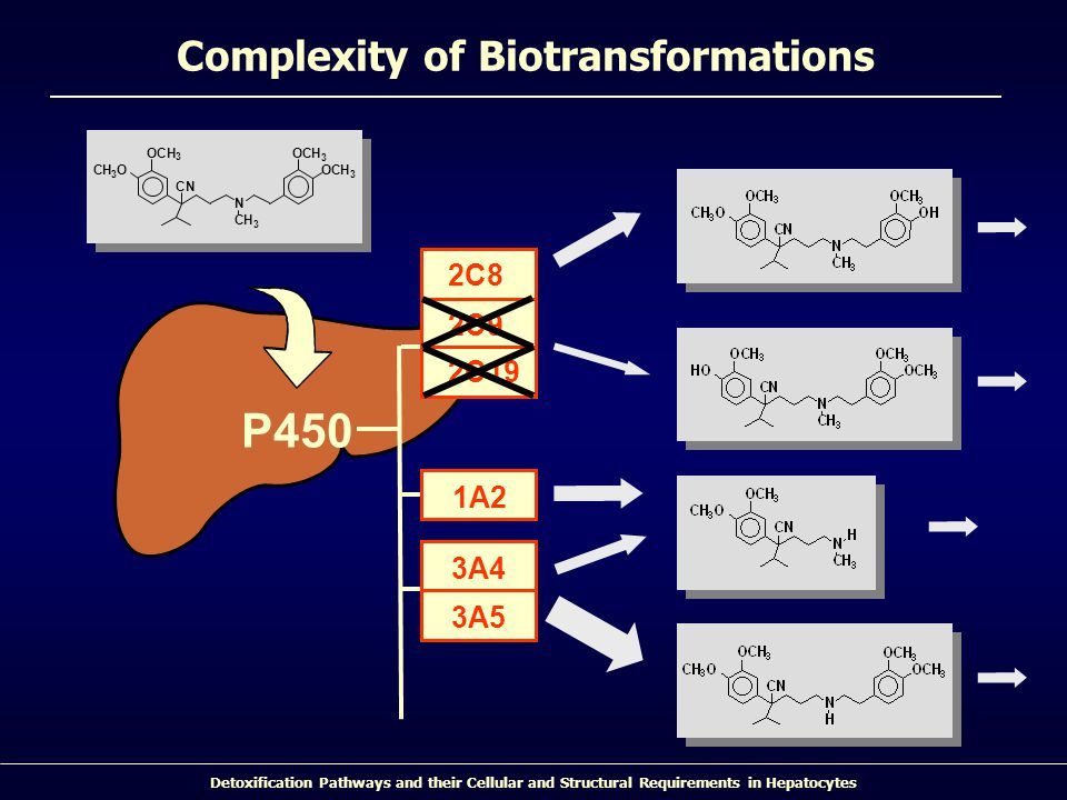 Detoxification Pathways and their Cellular and Structural Requirements in Hepatocytes Complexity of Biotransformations 2C9 2C19 2C8 1A2 3A5 3A4 P450 N