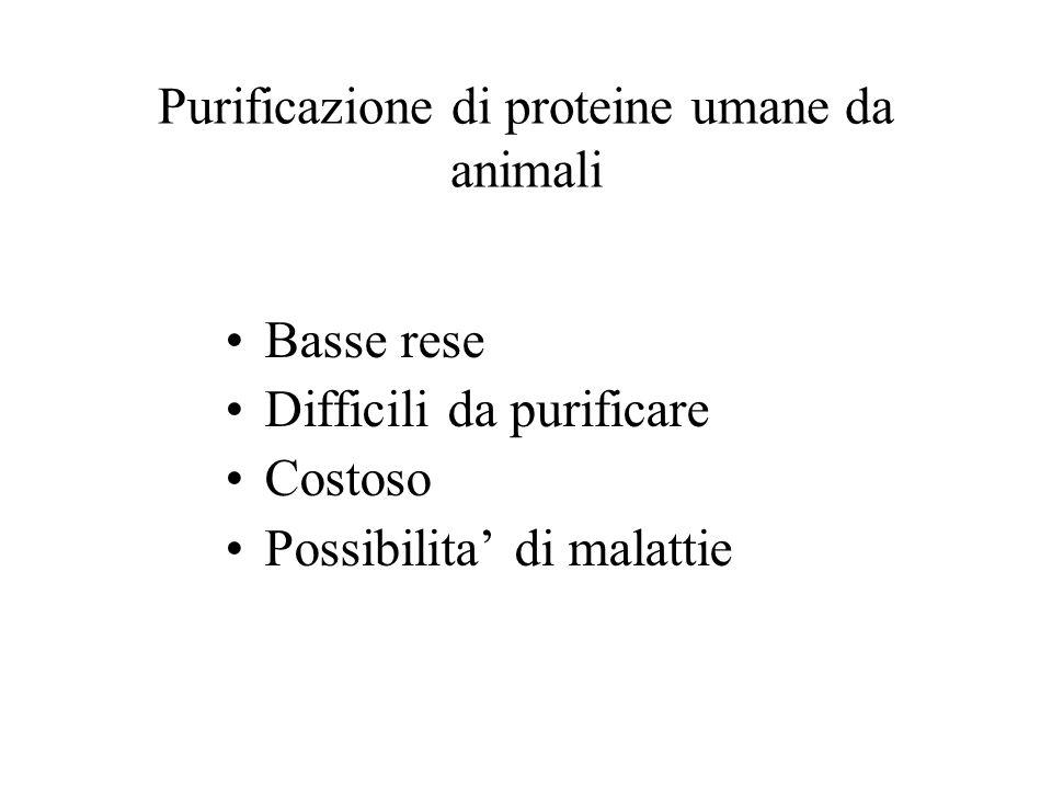 Purificazione di proteine umane da animali Basse rese Difficili da purificare Costoso Possibilita' di malattie