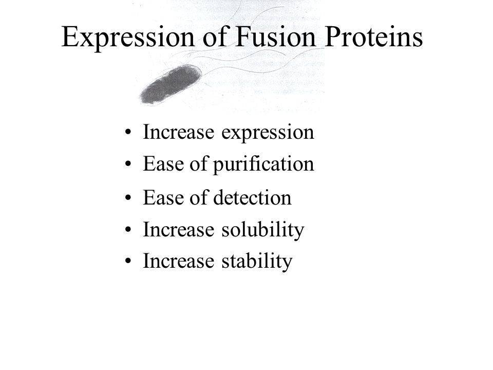 Expression of Fusion Proteins Ease of detection Increase solubility Increase stability Increase expression Ease of purification