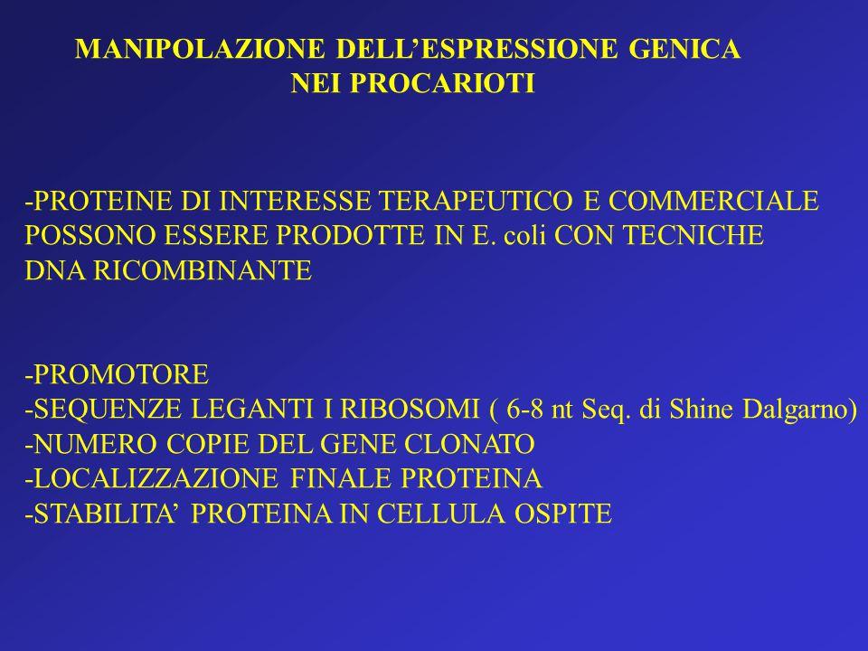MANIPOLAZIONE DELL'ESPRESSIONE GENICA NEI PROCARIOTI -PROTEINE DI INTERESSE TERAPEUTICO E COMMERCIALE POSSONO ESSERE PRODOTTE IN E.