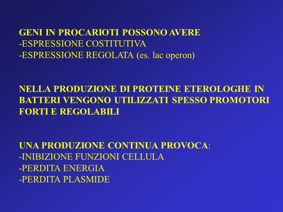 GENI IN PROCARIOTI POSSONO AVERE -ESPRESSIONE COSTITUTIVA -ESPRESSIONE REGOLATA (es.