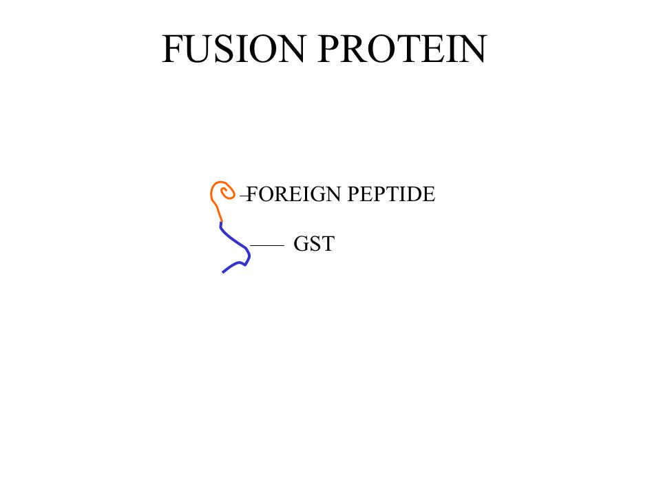 FUSION PROTEIN GST FOREIGN PEPTIDE