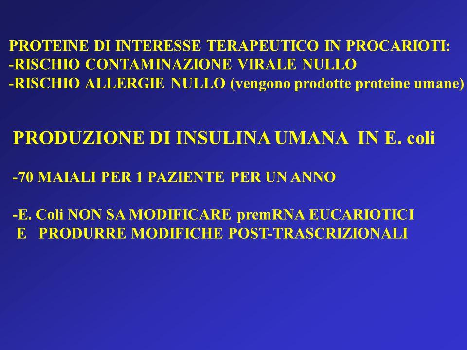 PROTEINE DI INTERESSE TERAPEUTICO IN PROCARIOTI: -RISCHIO CONTAMINAZIONE VIRALE NULLO -RISCHIO ALLERGIE NULLO (vengono prodotte proteine umane) PRODUZIONE DI INSULINA UMANA IN E.